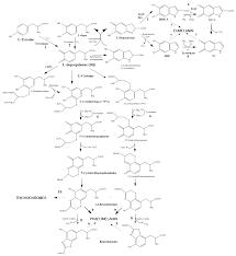 ijms free full text bird integumentary melanins biosynthesis