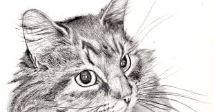 easy cat drawings in pencil amazing wallpapers