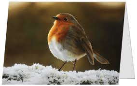 pack of 10 airbrush charity christmas cards a6 size u0027robin in