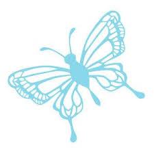 331 best just butterflies images on butterflies