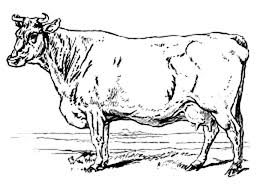 sharp horn milch cow colouring page fun colouring