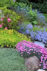 plants for rock gardens create a front yard retreat rock garden plants beautiful rocks
