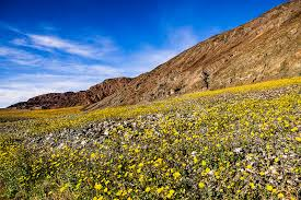 Best places in california to see wildflowers with kids this spring