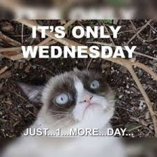 Wednesday Funny Meme - wednesday meme funny it s wednesday pictures