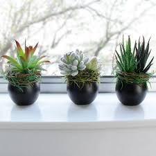Indoor Plant Arrangements Indoor Plant Arrangements Home Design Ideas