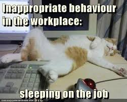 Sleeping In Meme - sleeping on the job lolcats lol cat memes funny cats