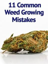 cheap grow lights for weed beginning pot grower don t make these 11 common mistakes grow