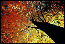 fall trees photohraphs photography