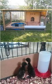Backyard Chicken Coops Australia by 25 Best Chicken Shed Ideas On Pinterest Chicken Coops Chicken