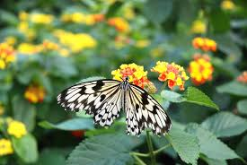 free images nature leaf flower environment insect natural