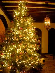 christmas tree decorated ideas decoration inspiring transitional