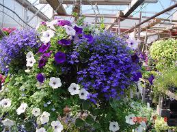 pretty flower garden ideas amazing flower garden 1600x1200 whitevision info