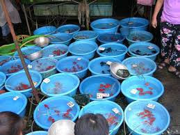 fishing how to make money from an ornamental fish business