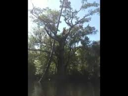 big balls chug tree jump