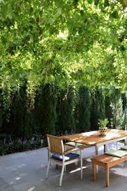 coolum native nursery trees and shrubs to 6 metres 25 best canterbury images on pinterest canterbury garden ideas