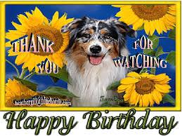 australian shepherd happy birthday happy birthday wishes 01