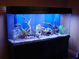 makeovers and cool decoration for modern homes fish aquarium