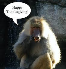 the prancing papio happy thanksgiving y all