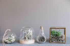 diy a home terrarium image interiors u0026 living image ie