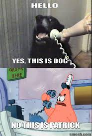 Spongebob Internet Meme - yes this is dog f u n n y pinterest dog spongebob memes