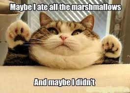 Cat Internet Meme - marshmallow cat internet memes juxtapost