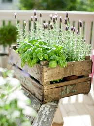 herb gardening tips archives herb gardening today