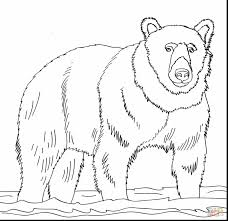 astounding brown bear coloring page with brown bear coloring pages