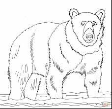 fantastic hibernation bear coloring page with brown bear coloring