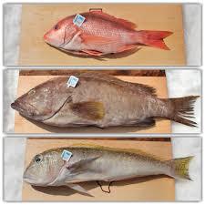katies seafood market