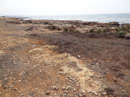 M M Landscaping by M M Makronisos Marina Ayia Napa Atlantis Consulting Cyprus Ltd