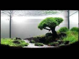 zen tree and scenic aquarium fish aquariums fish