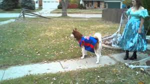 Husky Dog Halloween Costumes Siberian Husky Halloween Costume