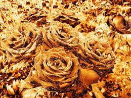 golden roses photo collection golden flowers