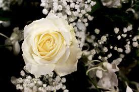 fleurs blanches mariage fleur blanche mariage nom la pilounette