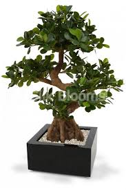 shop artificial luxury panda bonsai tree 70cm from silk blooms