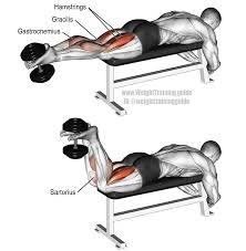 Bench Exercises With Dumbbells Dumbbell Leg Curl Exercise Instructions And Weight