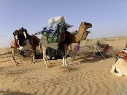 camel tents