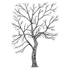tree vector sketched royalty free cliparts vectors and stock