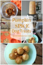 pumpkin spice dog treats golden daily scoop