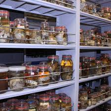 si nmnh invertebrate zoology home