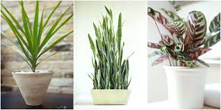 plants that don t need sunlight to grow plants that grow without sunlight indoor plants that don t need