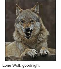 Lone Wolf Meme - 洢ma lone wolf goodnight wolf meme on sizzle
