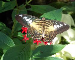 florida native butterfly plants the schramm journey december 2015