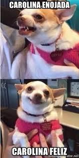 Meme Chihuahua - carolina enojada carolina feliz chihuahua doge meme generator