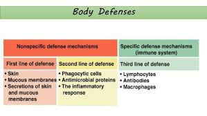 Anatomy And Physiology Pick Up Lines Human Anatomy And Physiology Lymphatic System And Body Defenses