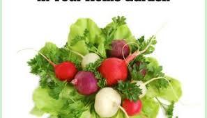 easy vegetables to grow u2013 home garden joy