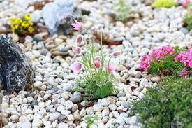 small rock garden constructed with rocks and alpine plants stock