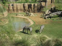 Dallas Zoo Map by Giants Of The Savanna Dallas Zoo Thequeenstyles Com