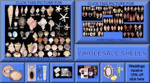 where to buy seashells the shell store online seashells