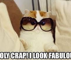 Cute Cat Memes - top 25 funny cat memes cutest cats